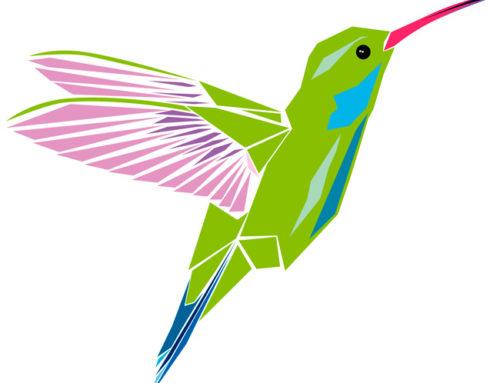 Qué es Google Hummingbird Update y cómo adaptar tu web para sacar provecho de este cambio en el algoritmo